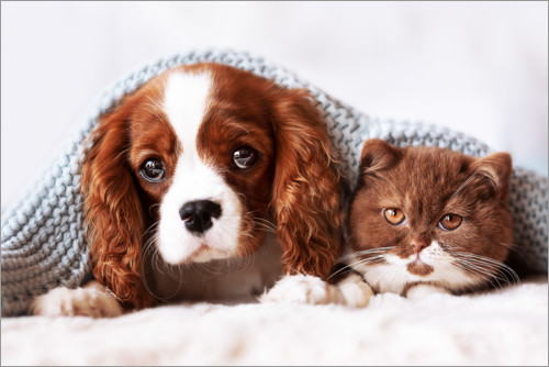 Premium poster Friends - puppy and kitten