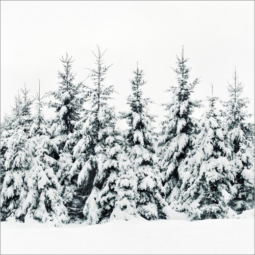Premium poster Winter forest