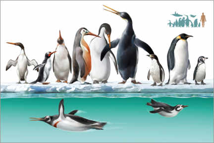 Canvas print  Penguins - Jose Antonio Penas