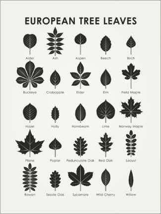 Aluminium print  European tree leaves - Iris Luckhaus