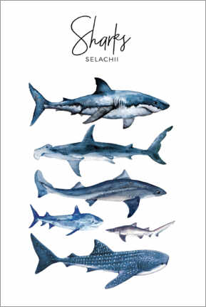 Gallery print  Sharks - Art Couture