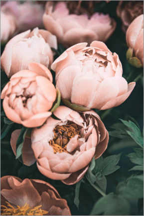 Acrylic print  Peonies in Pink - Sisi And Seb