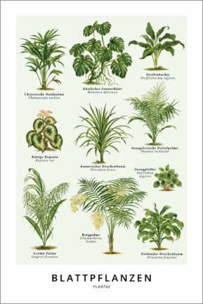Canvas print  Foliage plants (German) - Wunderkammer Collection