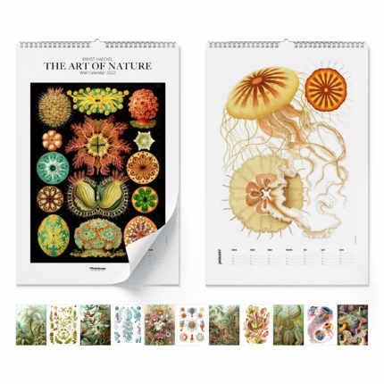 Wall calendar  Ernst Haeckel, The Art Of Nature 2020 - Ernst Haeckel