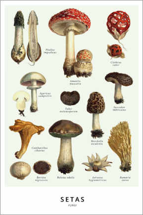 Premium poster  Mushrooms (Spanish) - Wunderkammer Collection