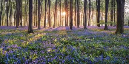 Canvas print  Sea of flowers in the fairytale forest - The Wandering Soul