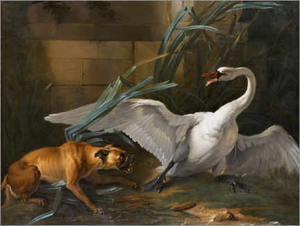 Premium poster  Swan attacked by a dog - Jean-Baptiste Oudry