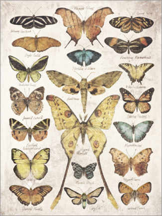 Canvas print  Butterflies and Moths - Mike Koubou