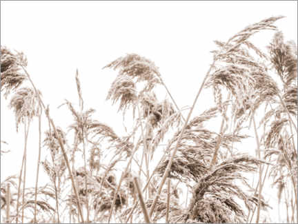 Canvas print  Autumn Reeds I - Magda Izzard