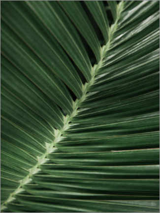 Canvas print  Palm leaf I - Magda Izzard