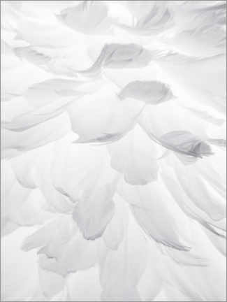 Canvas print  Feathers II - Magda Izzard