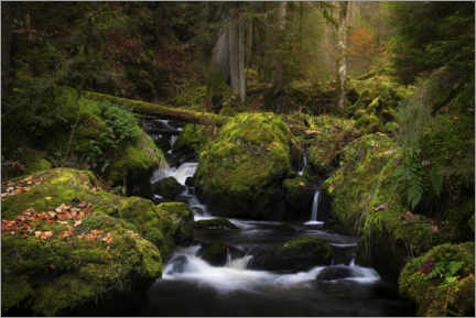 Aluminium print  Small waterfall in the Black Forest in Germany - Jos Pannekoek