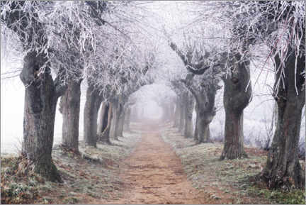 Wood print  Linden avenue in the fog and hoarfrost - The Wandering Soul