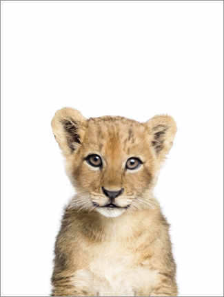 Aluminium print  Baby Lion - Sisi And Seb
