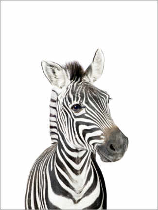 Wall sticker  Baby Zebra - Sisi And Seb