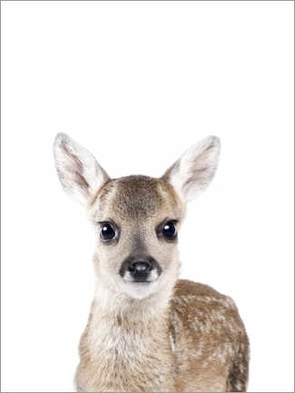 Gallery print  Baby Deer - Sisi And Seb