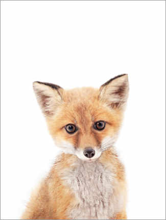 Acrylic print  Baby Fox - Sisi And Seb
