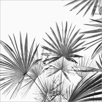 Canvas print  Palm fan - Sisi And Seb