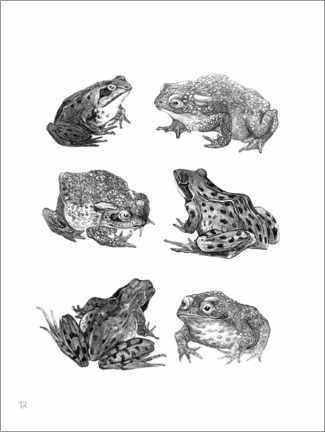 Aluminium print  Frogs and Toads - Theo van Hoytema