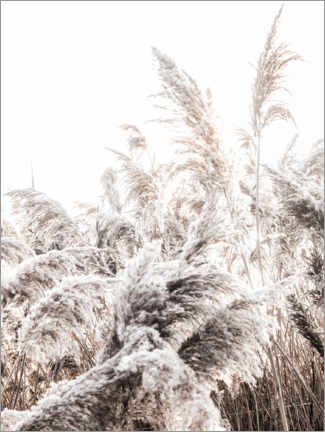 Canvas print  Grasses I - Magda Izzard