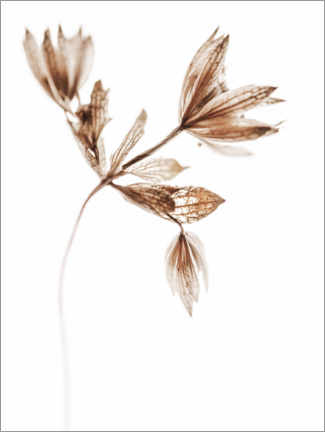 Wall sticker  Delicate plant - Magda Izzard