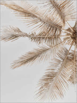 Foam board print  Golden palm VII - Magda Izzard