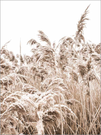 Foam board print  Golden grass III - Magda Izzard