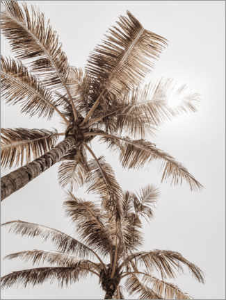 Canvas print  Golden palm VI - Magda Izzard