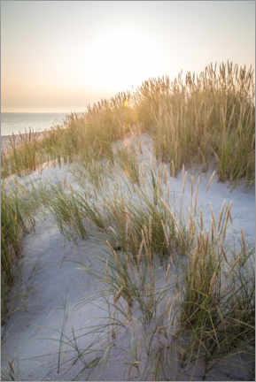 Canvas print  Morning sun in the dunes on Sylt - Christian Müringer
