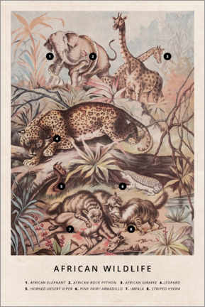 Canvas print  African wildlife (vintage) - Wunderkammer Collection