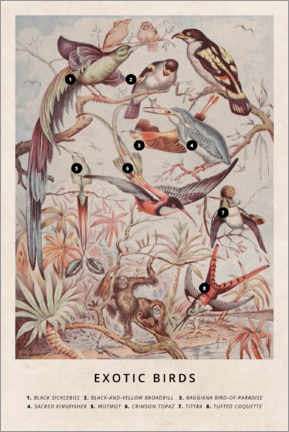 Wood print  Exotic birds - Wunderkammer Collection