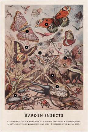 Canvas print  Garden insects - Wunderkammer Collection