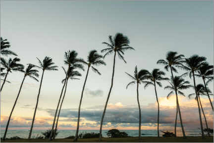 Canvas print  Palm trees on Kauai, Hawaii - Road To Aloha