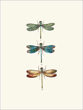 Wall sticker  Vintage dragonflies - Patruschka