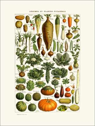 Premium poster  Antique vegetable plate in French - Patruschka