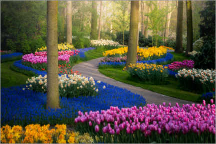 Premium poster  Colorful tulips in the Keukenhof - Albert Dros