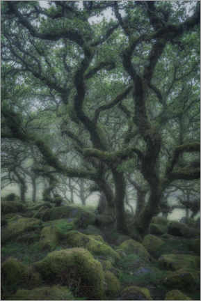 Foam board print  Ancient oaks - André Wandrei