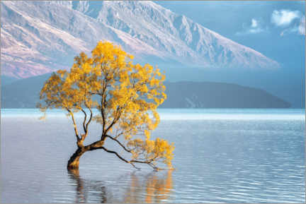 Acrylic print  Wanaka tree in the morning light - André Wandrei