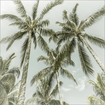 Canvas print  Palm Sky - Melanie Viola