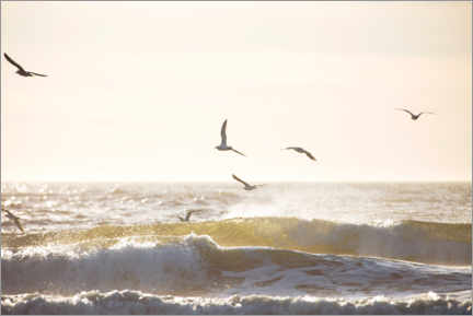 Premium poster  Seagulls fly over the North Sea - Jean Schwarz