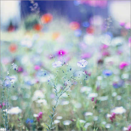Aluminium print  Colourful Flower Meadow in Summer - Nadja Jacke