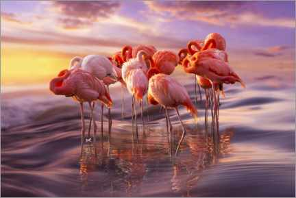Foam board print  Flamingo siesta - Adrian Borda