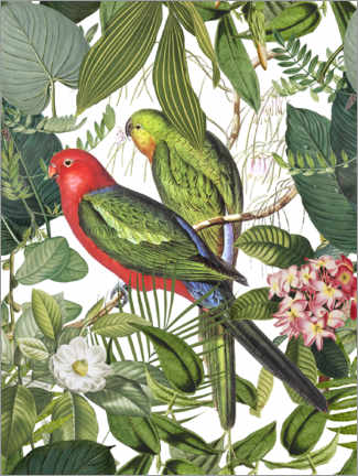 Canvas print  Birds in the tropical paradise - Andrea Haase