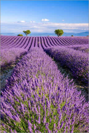 Canvas print  Summer in Provence - Achim Thomae