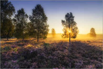 Premium poster Golden heather morning