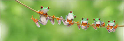 Canvas print  Funny frogs on a branch - Artur Cupak