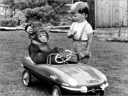 Canvas print  Monkey sits in a child's car - John Drysdale