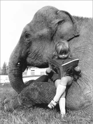 Premium poster  Girl Sits on Elephant and Reads - John Drysdale