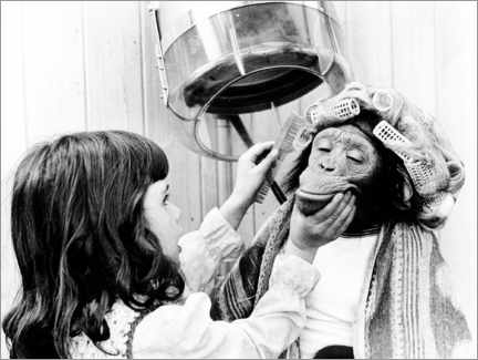 Canvas print  Girl combs chimpanzee with curlers - John Drysdale