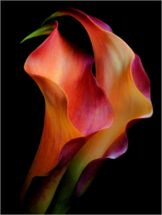 Canvas print  Tenderness - Jon Kinney